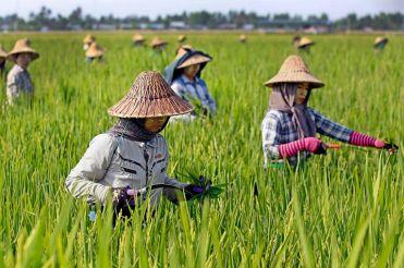 Plantacio-darros-fora-Naypyidaw-Myanmar_2008609268_53507376_766x509