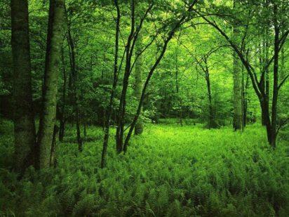 bosque-696x522